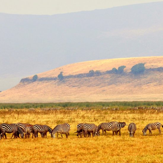 Group safari