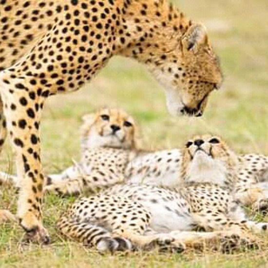 budget Kenya safari
