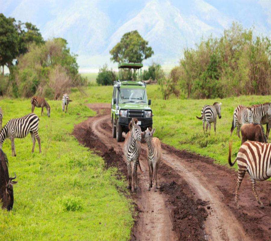 Budget safaris