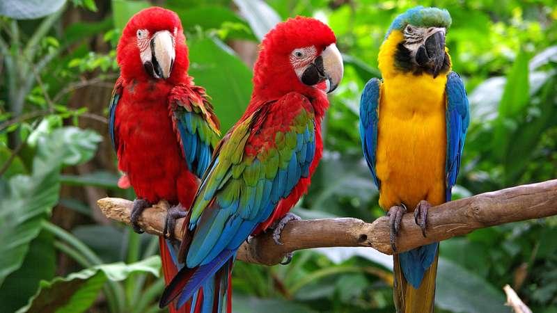 contact us -parrot Africa safaris