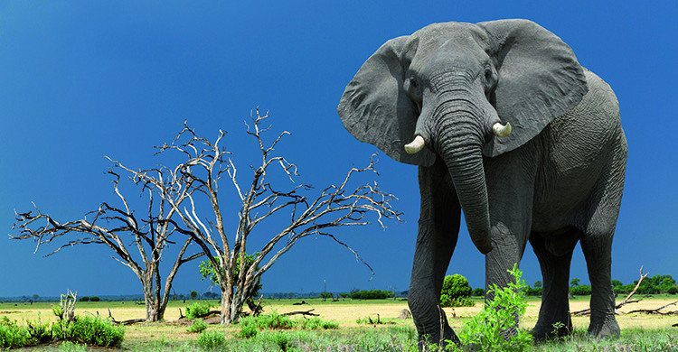 elephant lodge safari in Kenya