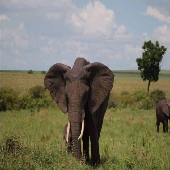 group joining camping safari