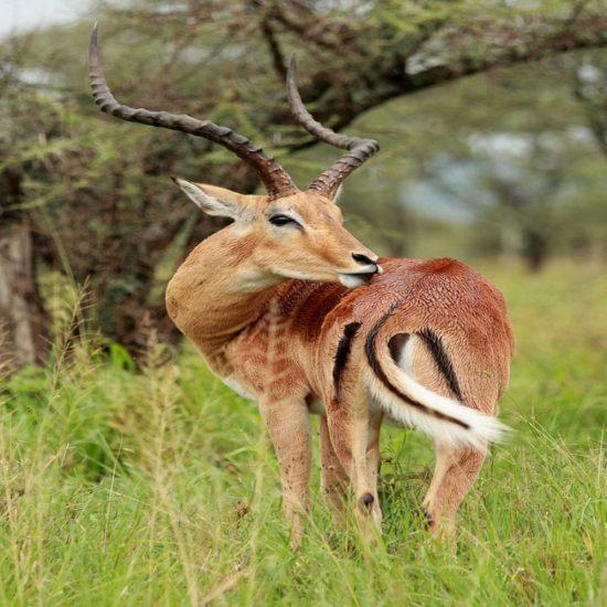 kenya tanzania lodge safari