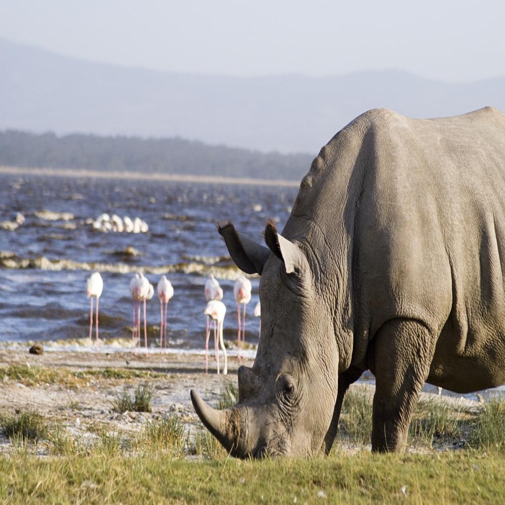 lodge safaris kenya