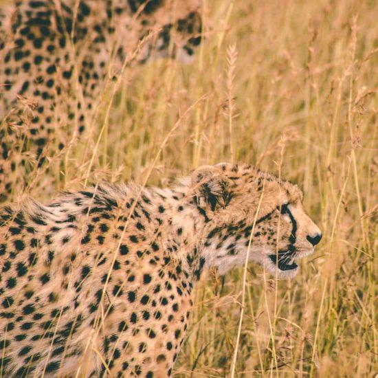luxury lodge safaris