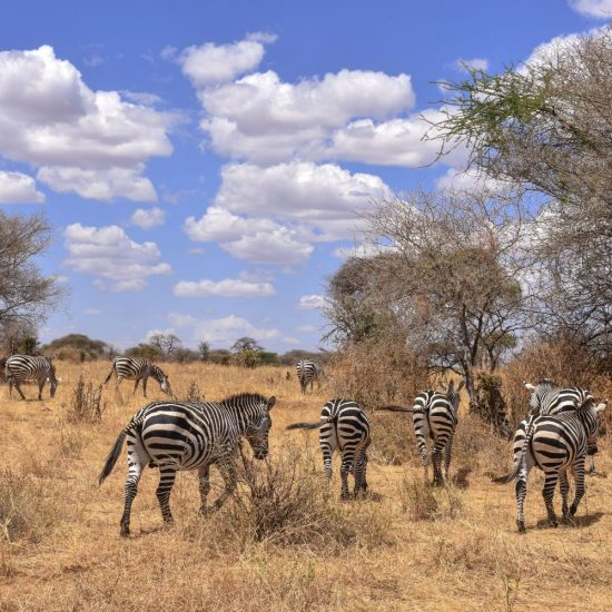 Kenya and tanzania budget tour