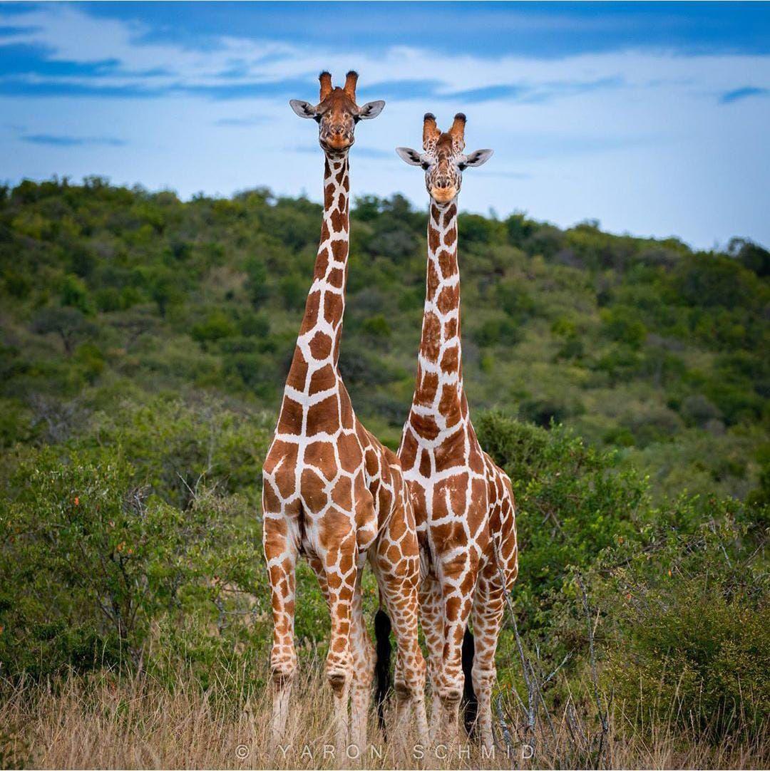 wildlife adventure safari